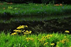 平池の初夏の水辺 8