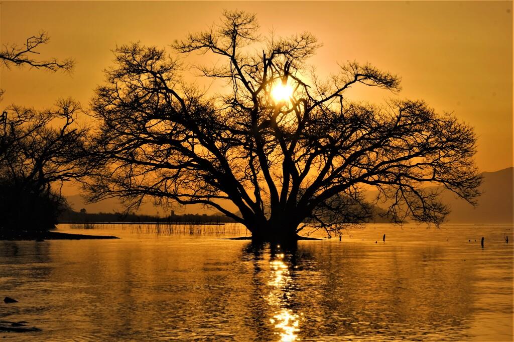 如月の夕木