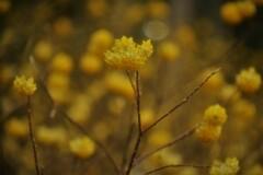 春薫妖精の森 8