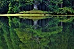 水鏡の千年杉 1