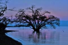 水中木夕景