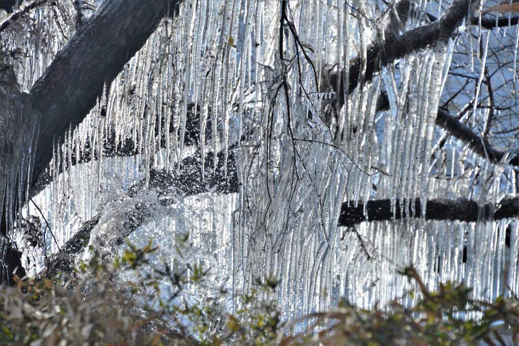 湖辺の氷柱 4