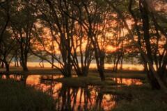湖辺の小さな森の夕景 2
