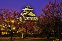 長浜城梅景夜景