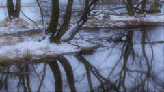 小さな森の水辺の冬物語 9