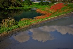 秋空映す水溜り 3