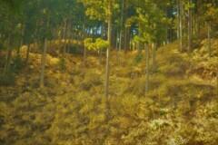 春薫妖精の森 2