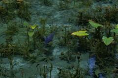 モネの池 5