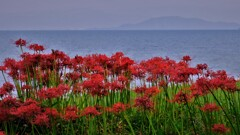 湖辺の彼岸花 1