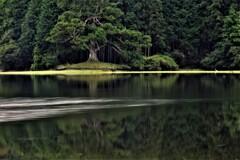 岩尾池一本杉 4