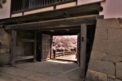 彦根城春散歩 天秤櫓門 6