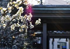 湯島神社にて