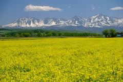 菜の花畑と十勝岳連峰