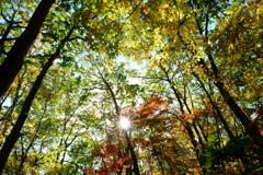 秋 木々に囲まれて