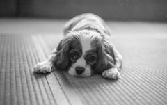 畳みの番犬