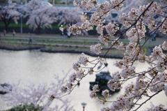 前橋公園の春
