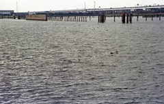 埠頭を横切る湾岸道路