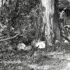 大樹に捨てられた陶磁器