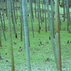 竹林の世界