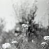 菜の花畑の一輪