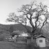 里山の村風景