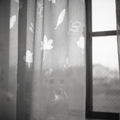 リーフのカーテン