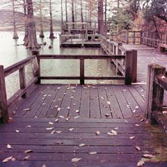 落葉の桟橋