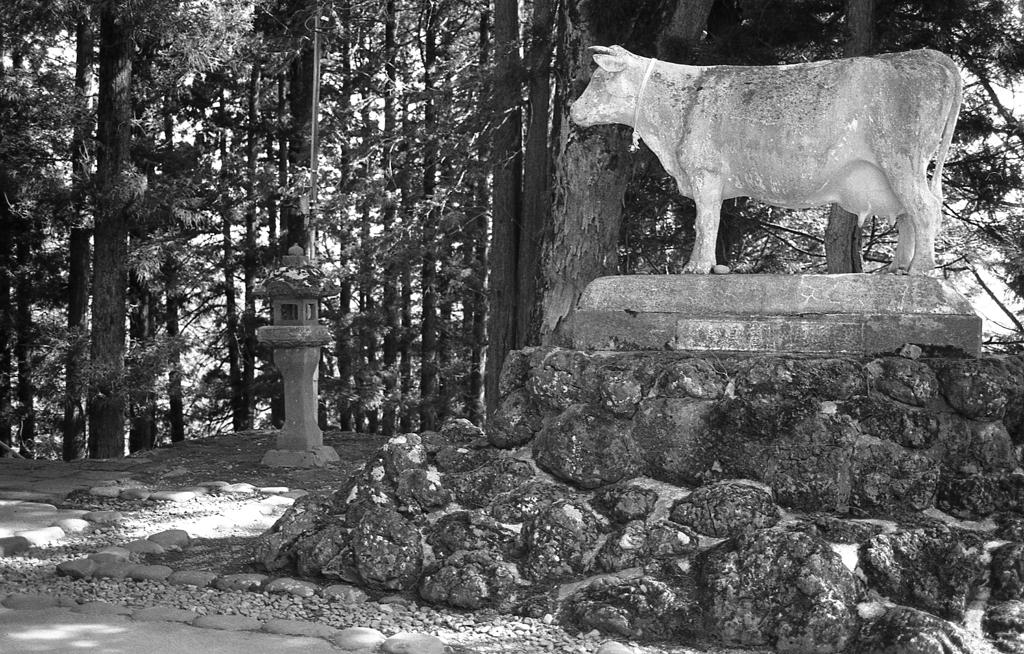 真楽寺の牛像