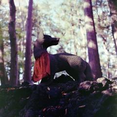 晩秋の落ち葉に化ける狐かな