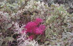 野辺の花に咲く紅の色