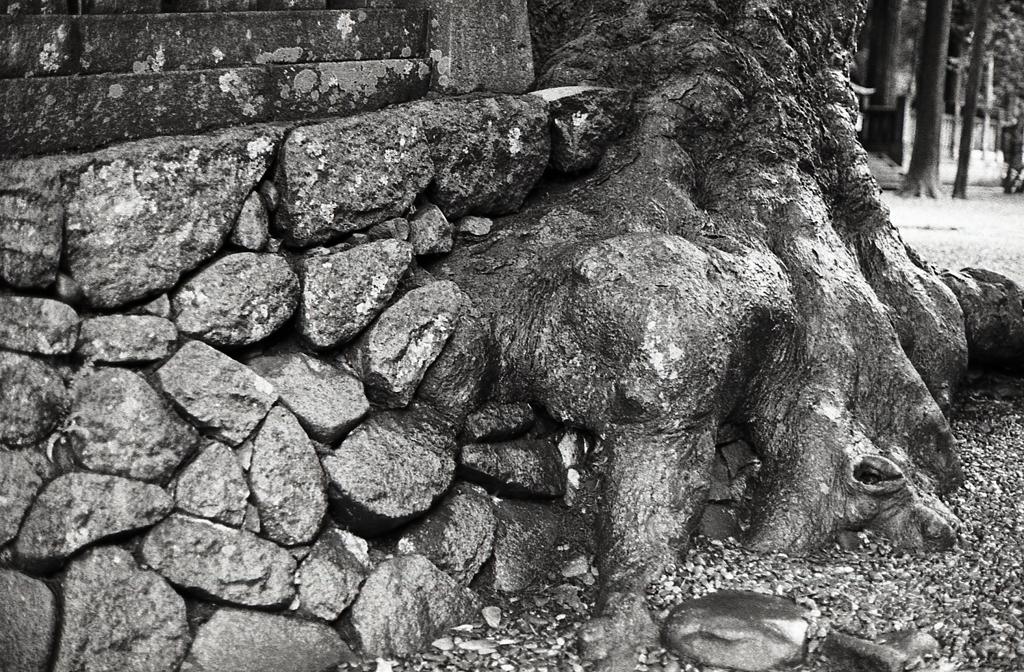 石垣と大木