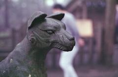 お狐様の顔