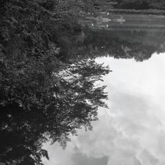 水面に映る雲と樹影