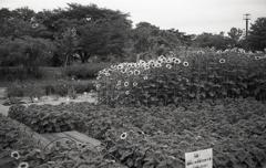 ひまわり園のスリーショット