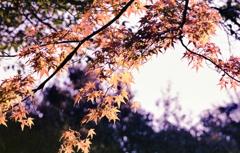 小牧山山頂に色づく紅葉