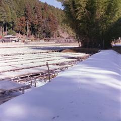 Virgin Snow(処女雪)の小さな足跡