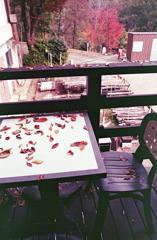 落ち葉のテーブル