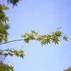 紅葉の花が咲いていた。 ~春日井市都市緑化植物園