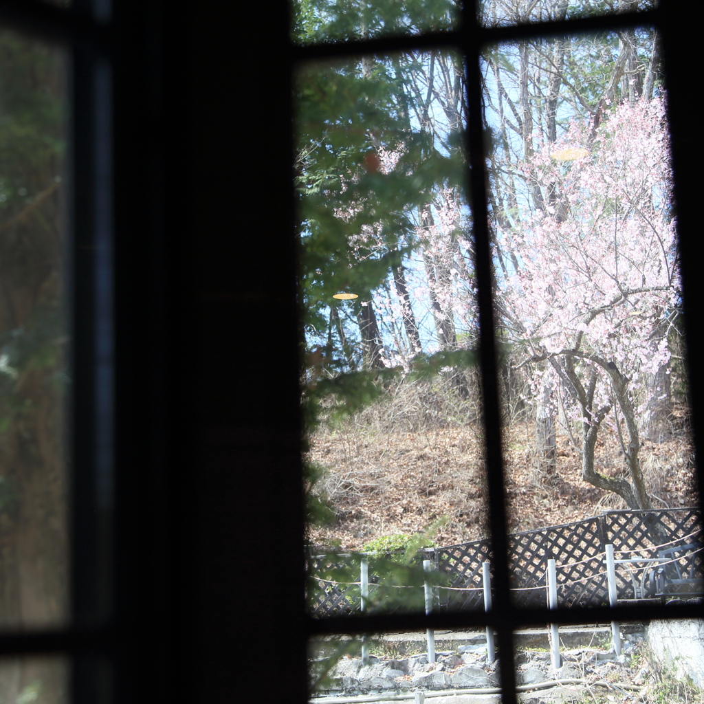 窓辺に…桜咲く頃