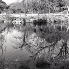 揺れる湖面