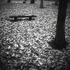落ち葉のベンチ