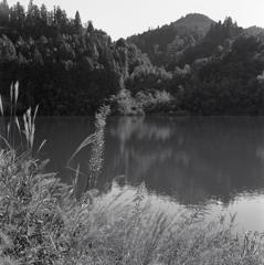 木曽川の水辺