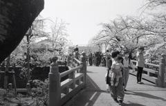 住吉橋で春を眺める人々