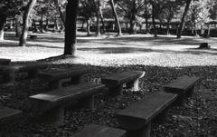 落ち葉の中のベンチ群