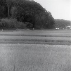 今井の田園風景