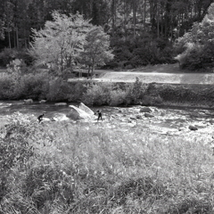 白川で投網をする風景