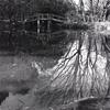 水面の冬木