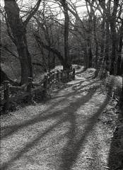 睡蓮池の木陰を歩く