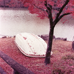 丘ボートに紅葉の葉が…