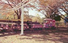秋色を走る電車